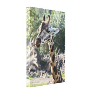 Giraffe Leinwanddruck