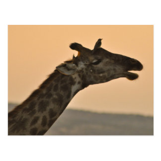 Giraffe mit einer Vogel Postkarte