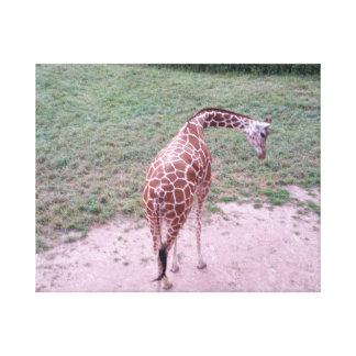 Giraffen-Blues Leinwanddruck