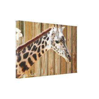 Giraffen-Fotografie-Drucke Leinwanddruck