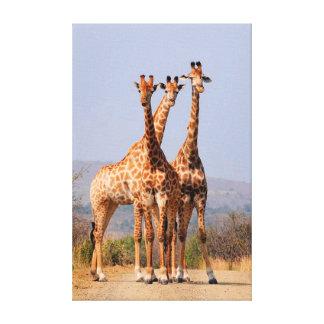 Giraffen Leinwanddruck