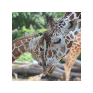 Giraffen-Liebe Leinwanddruck