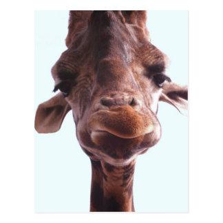 Giraffen-lustiges Gesicht Postkarte