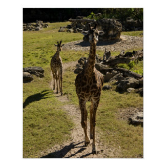 Giraffen-Mamma und Baby-Kalb Poster