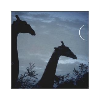 Giraffen-Mond Leinwanddruck