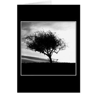 Glastonbury Weißdorn. Baum. Schwarzweiss. Karte
