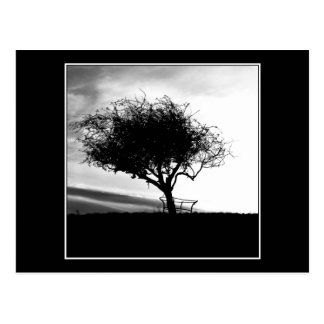Glastonbury Weißdorn. Baum. Schwarzweiss. Postkarte
