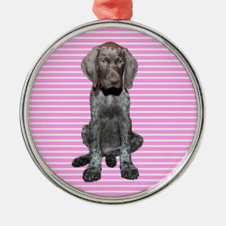 Glatter Graubär im Rosa Silbernes Ornament