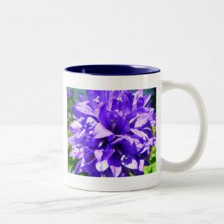 Glockenblume (Campanula glomerata Superba) Zweifarbige Tasse