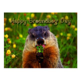 Glücklicher Groundhog Tag Blume essend Postkarte