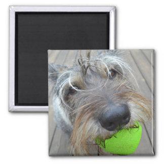 Glücklicher Hund mit Ball-Magneten Quadratischer Magnet