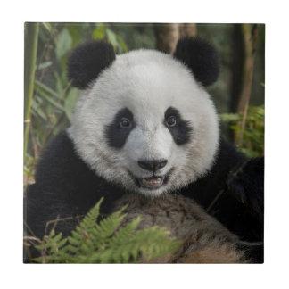 Glücklicher junger Panda, China Fliese