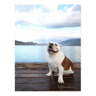 glücklicher Stierhund, der auf Plattform nahe See Postkarte