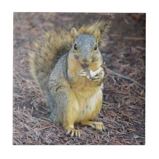 Glückliches hungriges Eichhörnchen Fliese