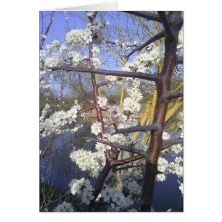 Glückliches Imbolc (Schlehdornblüte) Karte