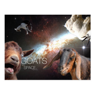 Goats.In.Sp-As Postkarte