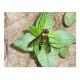 Gold jagen der Fliegen-Postkarte Postkarte