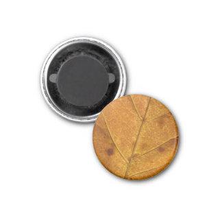 Gold-u. Brown-Herbst-Blatt-Magnet Runder Magnet 3,2 Cm