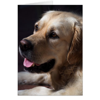 Golden retriever karte