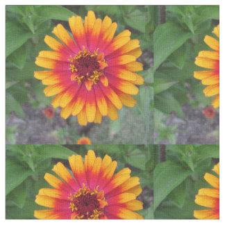 Goldene gelb-orangee Zinnia-Blume Stoff