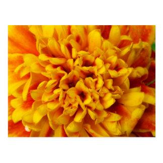 Goldene gelbe Ringelblumen-nahes hohes Postkarte