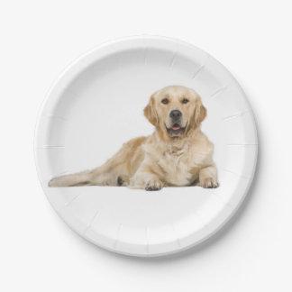 Goldener Retriever-Welpen-Hundehochzeits-Party Pappteller