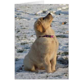 Goldener Welpen-Schnee Karte