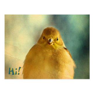 Goldfinch-Foto Postkarte