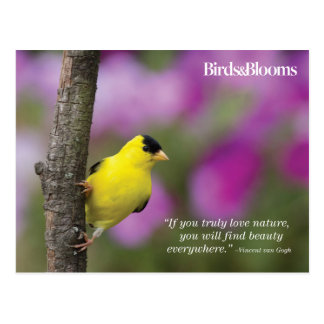 Goldfinch Postkarte