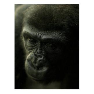 Gorilla Closeup.png Postkarte