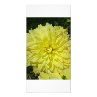 Grand Dhalia jaune Modèle Pour Photocarte