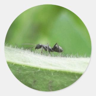 Grande fourmi noire sticker rond