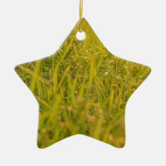 Gras-Detail-Foto Keramik Ornament