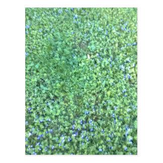 Gras-Feld Postkarte