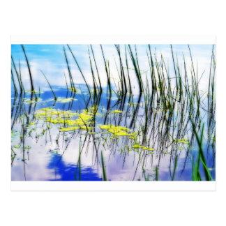 Gras und Blues.JPG Postkarte