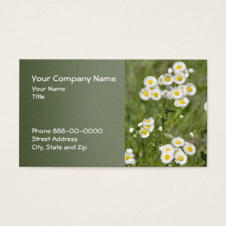 Grasland Fleabane Wildblume-Geschäfts-Karte Visitenkarte