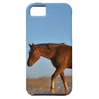 Grasland-Pferd iPhone 5 Etuis
