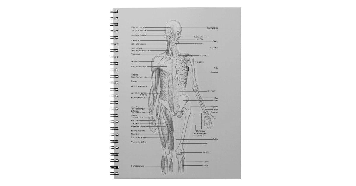 Gemütlich Grau Anatomie Für Studenten Zeitgenössisch - Anatomie ...