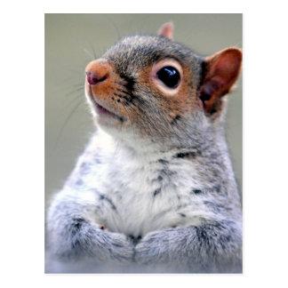 Graue Eichhörnchen-Gesichts-Fotografie Postkarte