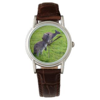 Graue Kängurus auf grünem Gras, Uhr