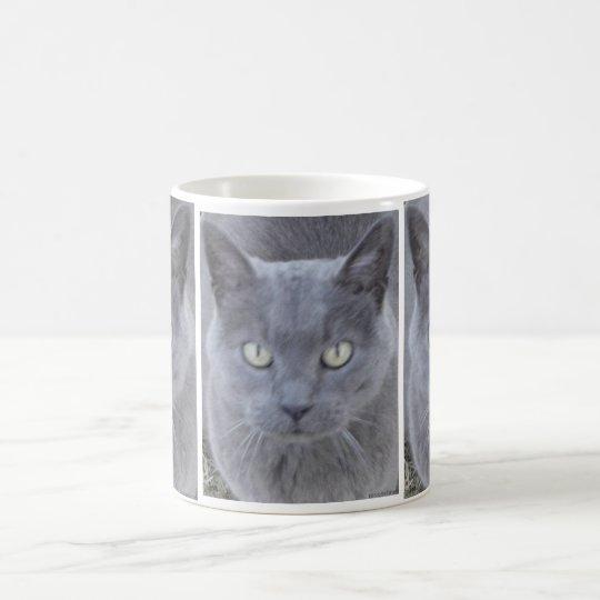 Graue Katzen-Gesichts-Nahaufnahme Kaffeetasse