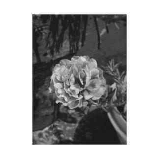 Graue Schwarzweiss-Farbflowar Foto Leinwanddruck