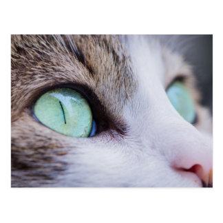 Graue Tiger-Katze mit hellgrünen Augen Postkarte