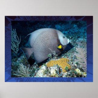 Grauer Angelfish für den Vatertag! Posterdrucke