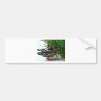 Grauer Vogel mit Blau auf Feder und orange Füßen Autoaufkleber