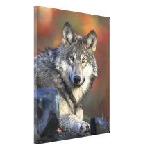 Grauer Wolf-Herbst-Leinwand-Druck