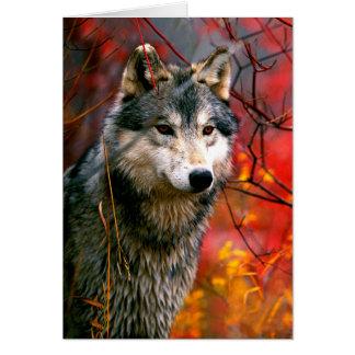 Grauer Wolf im schönen roten und gelben Laub Karte