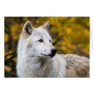 Grauer Wolf-Porträt auf Gold Karte