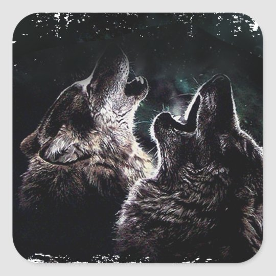 GRAUER WOLF-WOLF-WILD LEBENDE TIERE QUADRATISCHER AUFKLEBER