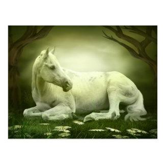Graues arabisches Pferd Postkarte